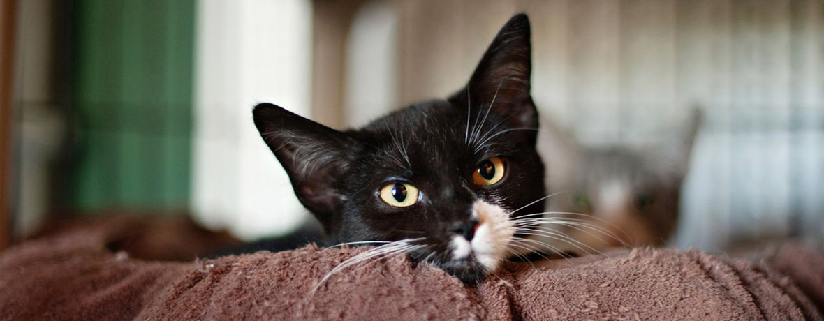 Adopt a Feline at Community Cats